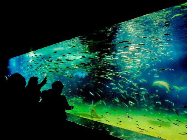 葛西臨海水族園 Tokyo Sea Life Park