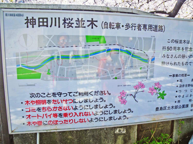 東京観光 神田川桜並木 Cherry Blossoms in kandagawa